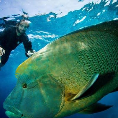 ABC Snorkel Charters Online Resources